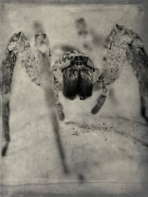 Photograph - The Spider Series Xii by Marco Oliveira
