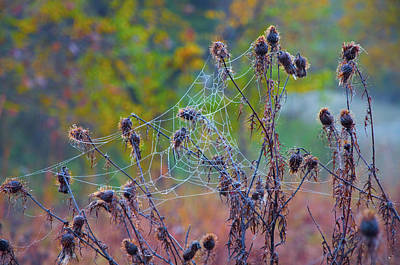 Weed Digital Art - The Spider Web by Bill Cannon
