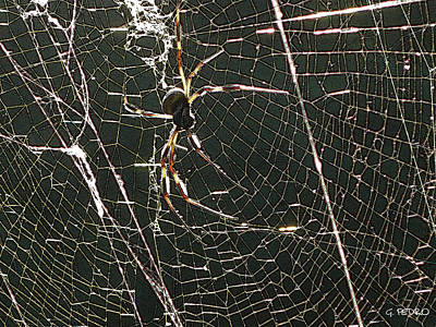 Photograph - the Spider's Web by George Pedro