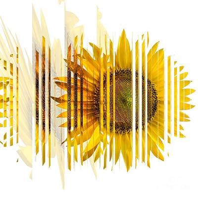 Photograph - The Spirit Of The Sunflower by Liane Wright