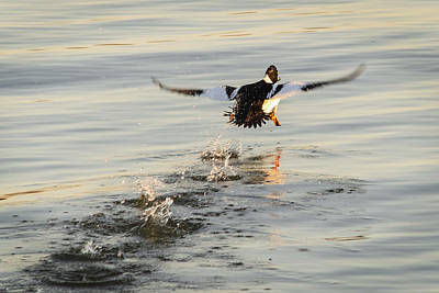Maryland Photograph - The Splashway by Benjamin DeHaven