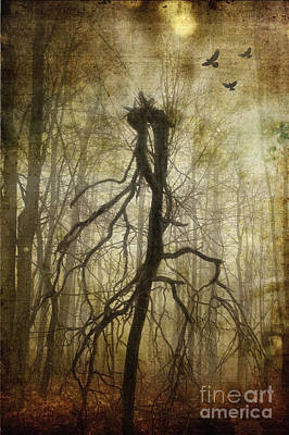Photograph - The Spookiest Tree In The Forest by Debra Fedchin