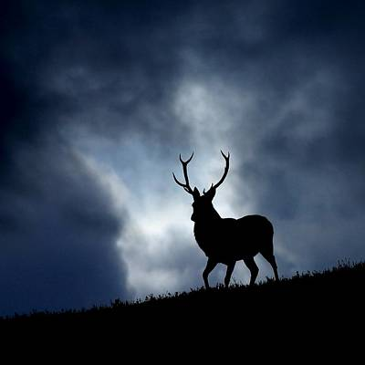 Photograph - The Stag by Macrae Images