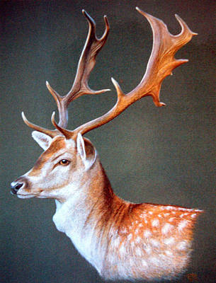 Art Print featuring the painting The Stag by Rosemary Colyer