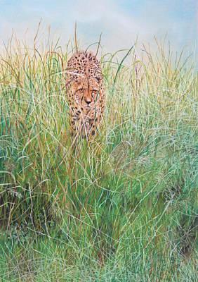 Cheetah Drawing - The Stalker by John Hebb