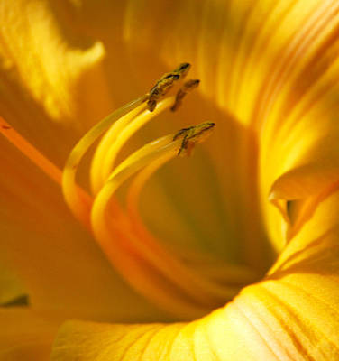 Art Print featuring the digital art The Stamen by Linda Segerson