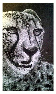 Cheetah Drawing - The Stare by Michelle Pope