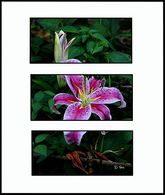 Photograph - The Stargazer Lily by James C Thomas