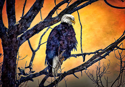 The Staring Eagle Art Print