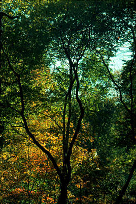 Photograph - The Start Of Fall by Ben Kotyuk