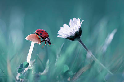 Ladybug Wall Art - Photograph - The Story Of The Lady Bug That Tries To Convice The Mushroom To Have A Date With The Beautiful Daisy by Fabien Bravin