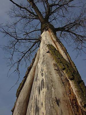 Guy Ricketts And Art Photograph - The Strange Tree by Guy Ricketts