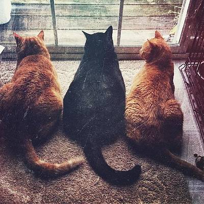 Pets Wall Art - Photograph - The Strangest View Upon Waking Is Three by Amber Flowers