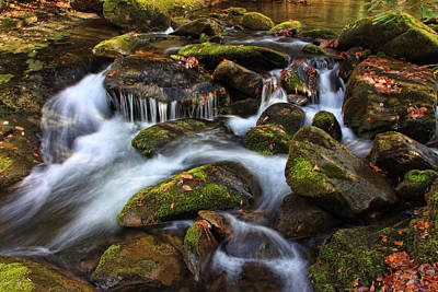 Photograph - The Stream by Shari Jardina