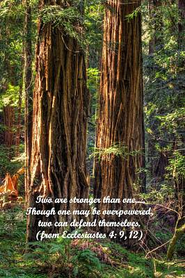 The Strength Of Two - From Ecclesiastes 4.9 And 4.12 - Muir Woods National Monument Art Print by Michael Mazaika