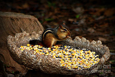 Photograph - The Stuffed Chipmunk by Reid Callaway