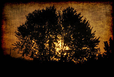 The Sun Behind The Tree Art Print by Frederico Borges