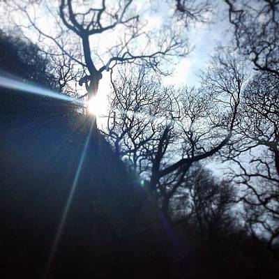 Background Photograph - The Sun Shining Through Trees  by Sean Cahill