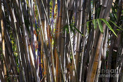 Photograph - The Sun Through Bamboo by Sally Simon