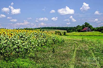 Photograph - The Sunflower Farm by Paul Mashburn
