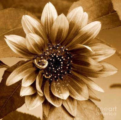 Photograph - The Sunflower by Peggy Hughes