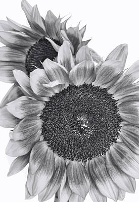 Photograph - The Sunflower With No Color by David and Carol Kelly