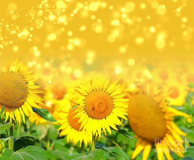 Deer Resistant Flowers Photograph - The Sunflowers by Boon Mee
