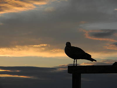 Art Print featuring the photograph The Sunset Perch by Jean Goodwin Brooks