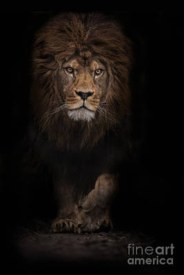 The Survivor Art Print by Ashley Vincent