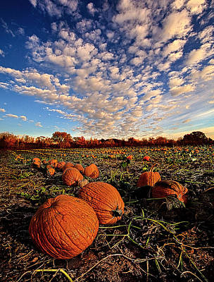 Pumpkin Fields Photograph - The Survivors by Phil Koch