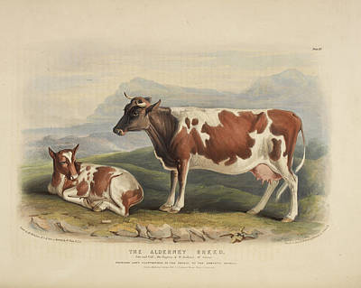 The Sussex Breed Art Print by British Library