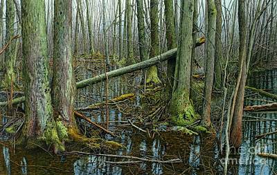 Painting - The Swamp 4 by Robert Hinves