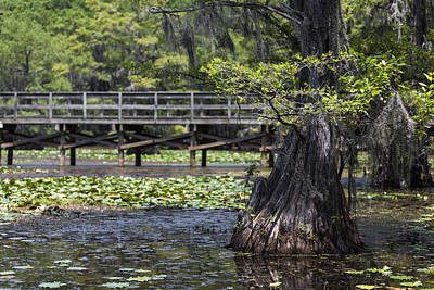Photograph - The Swamp Bridge by Amber Kresge
