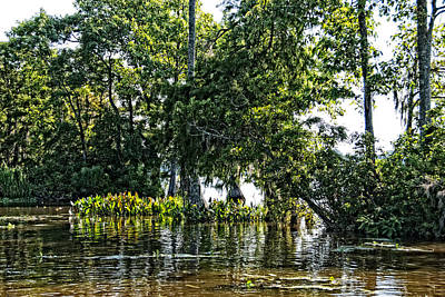 The Swamp Art Print by Ralph Jones