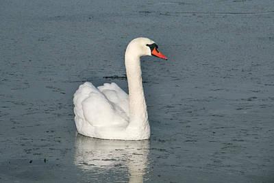 Zen Garden - The Swan by Kim Lessel