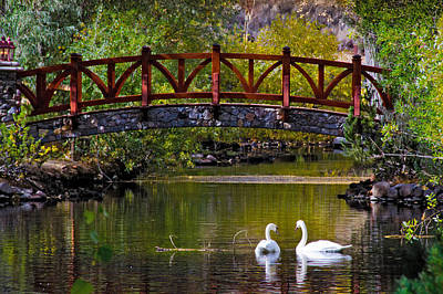 Art Print featuring the photograph The Swans At Caughlin Ranch by Janis Knight
