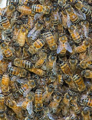 Photograph - The Swarm by Jim Zablotny
