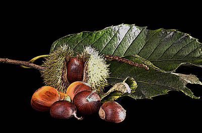 Photograph - The Sweet Chestnut by Richard Ortolano