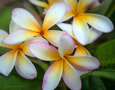Photograph - The Sweet Fragrance Of Plumeria by Pamela Winders