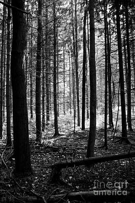 Photograph - The Tall Wood by Brad Marzolf Photography