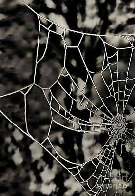 The Tangled Web Art Print by Sheila Laurens