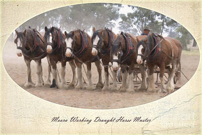 Clydesdale Photograph - The Team by Linda Lees