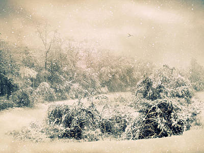 Snowed Trees Digital Art - The Tempest by Jessica Jenney