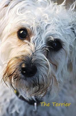 Boston Terrior Photograph - The Terrier by Lisa  DiFruscio