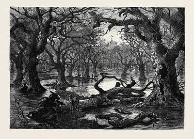 Park Scene Drawing - The Thames Floods Scene In The Home Park Windsor 1879 by English School