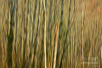Photograph - The Thicket by Winston Rockwell