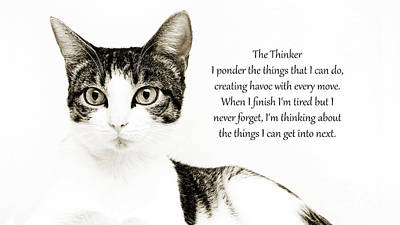 Andee Design Cats Photograph - The Thinker by Andee Design