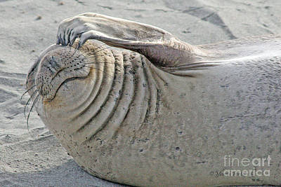 Photograph - The Thinker - Elephant Seal On The Beach by Tap On Photo
