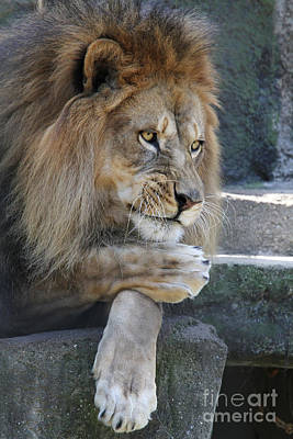 African Photograph - The Thinker by Judy Whitton