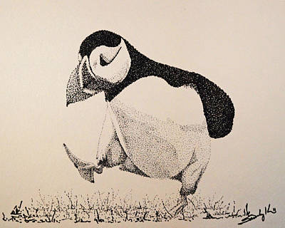 Puffin Drawing - The Thinker by Saundra Smoker
